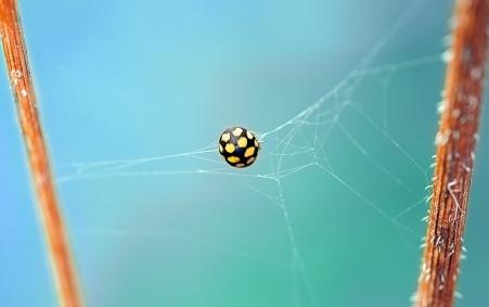 ladybug-beetle-yellow-points-48842.jpeg